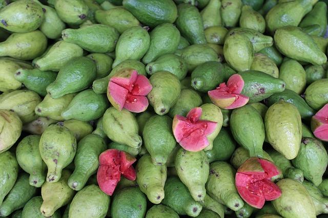 Guava fruit 4