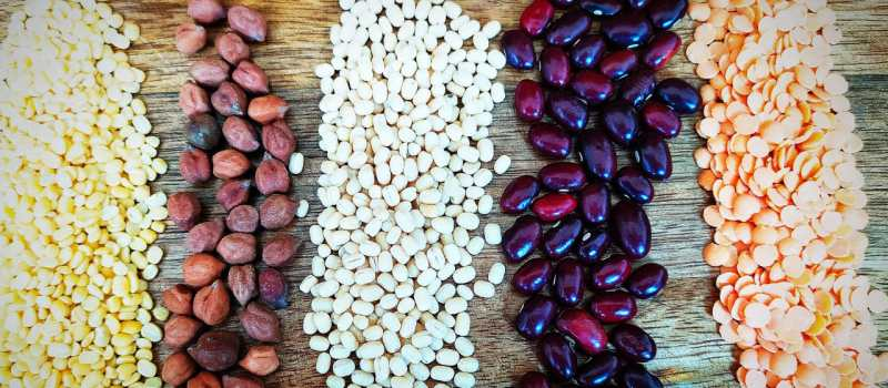 Diet during exam- Pulses are great source of protein