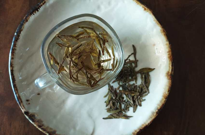 How to take green tea for health benefits? 11