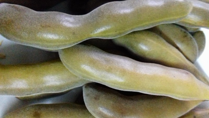 5 Health Benefits of Velvet bean or kaunch ke beej 8