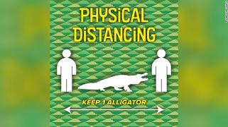 Social-distancing-florida-alligator-trnd-exlarge-169