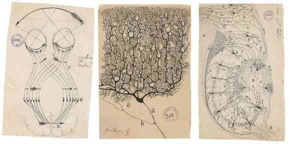 The father of neuroscience was also an amazing artist