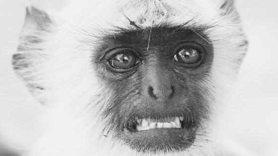 Monkey embracing uncertainty