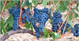 Toro Wine Region