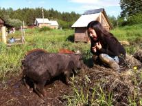 Aya and the piglets