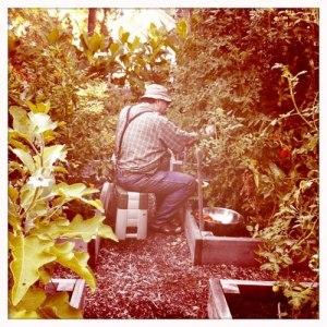 Jim working in his Northern California garden, Nelda Jessee