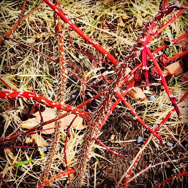 Thorns 14