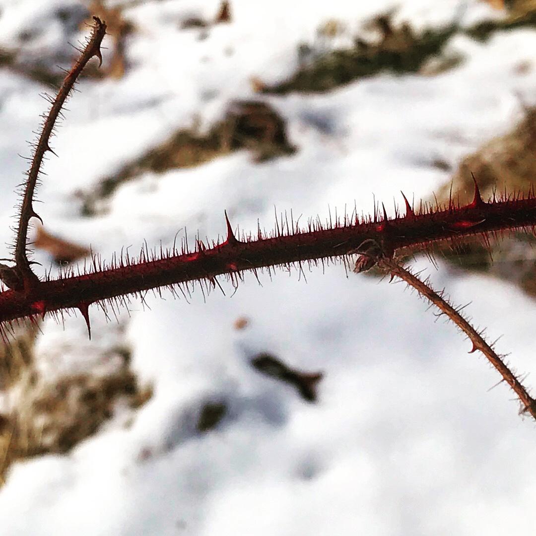 Thorns 8
