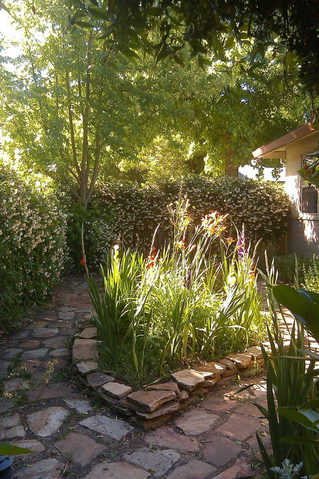 Light in our Northern California garden, JHD