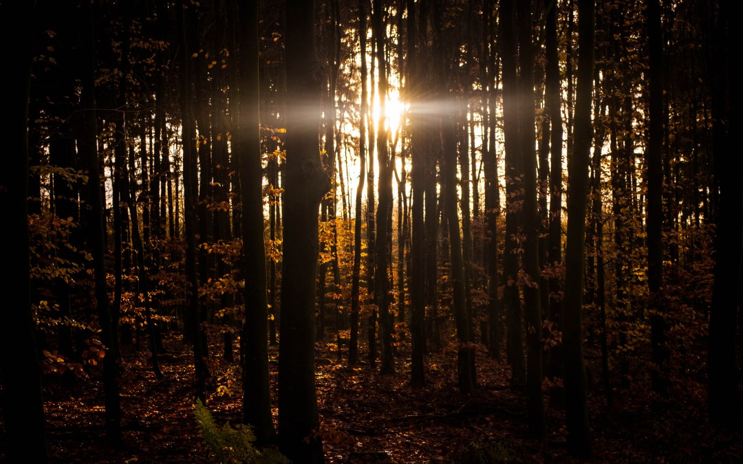 Ambiance: Forest at Night