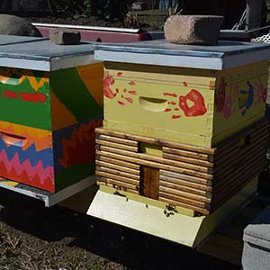 honeybees 1
