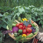 when-to-harvest-vegetables