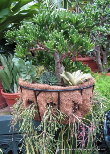 Cool succulent container