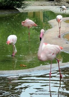 Flamingo yoga.