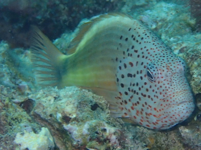 Fish life from Marcus's Golden Nuggets scuba dive.
