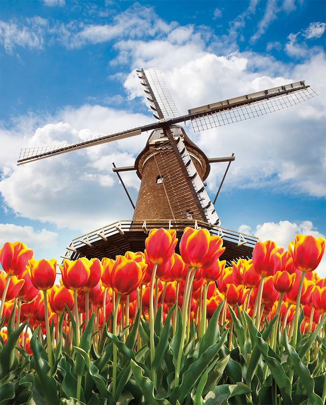 Holland in bloom - Image Viking Cruises.