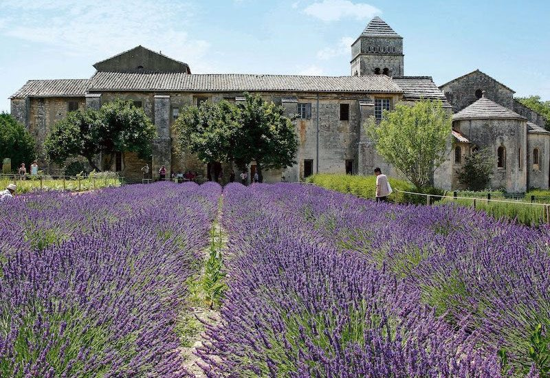 French lavender-farm 800x600