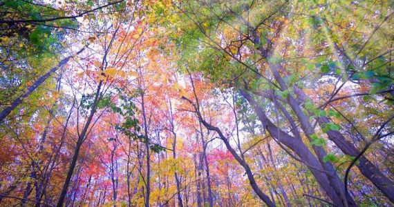 Fall-Forest-Connecticut-Image-@highlights 800x600