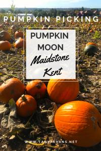 Pumpkin Picking at Pumpkin Moon in Maidstone, Kent