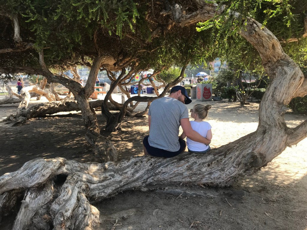 Our chosen picnic spot under the twisty trees