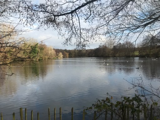 The beautiful lake at Weald Country Park in the heart of winter