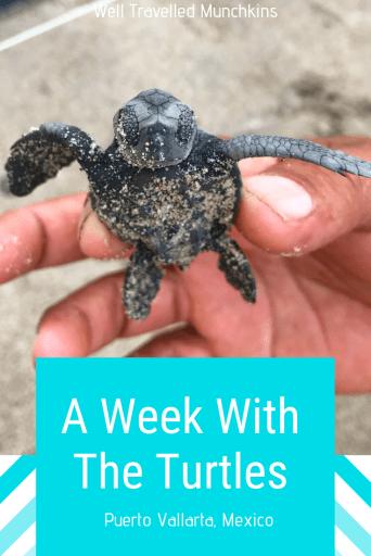 A week with the turtles at the Hyatt Ziva in Puerto Vallarta