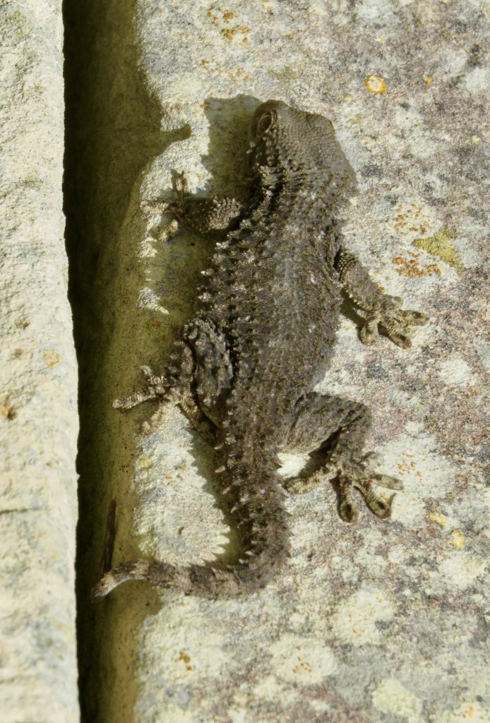 Qawra Point Beach lizard safari - Bugibba with kids