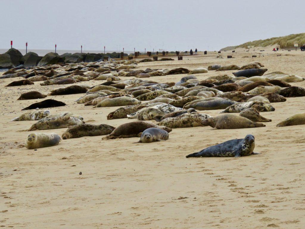 Horsey Gap seals