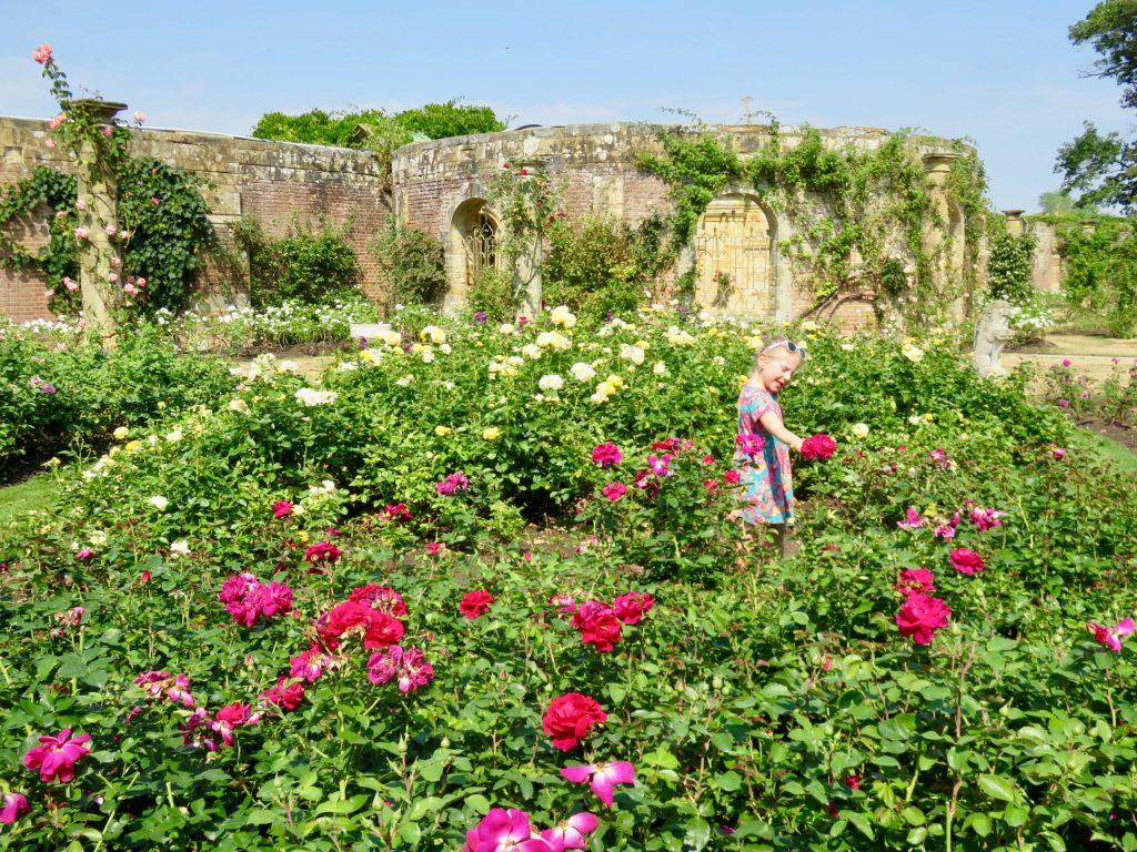Hever Castle in Kent Rose Garden