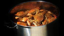 Best Steamed Crabs at the River Shack in Maryland