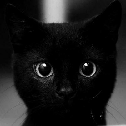 big-eyes-black-black-cat-