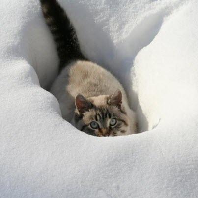 cat hiding snow