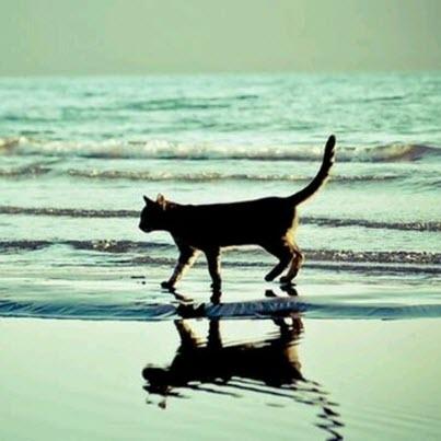 cat on sea shore