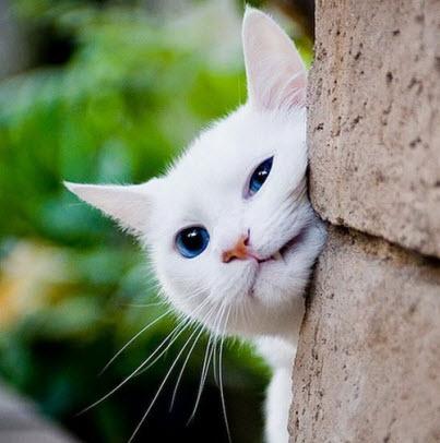 cat rub on wall