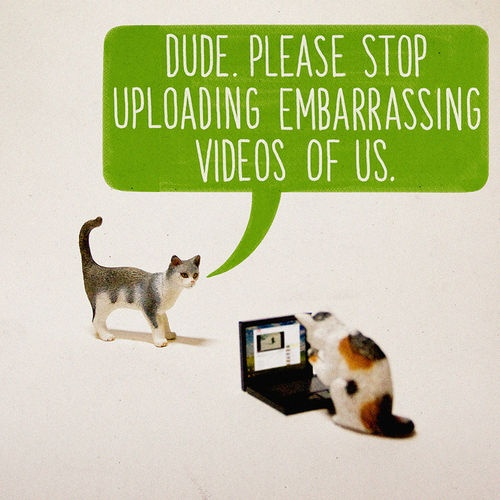 embarrassing cat videos