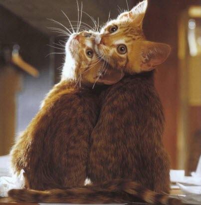 cats looking over shoulder