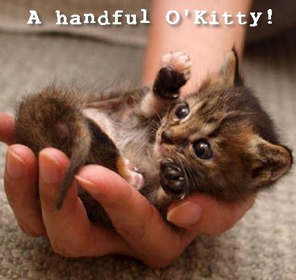 handful o kitty