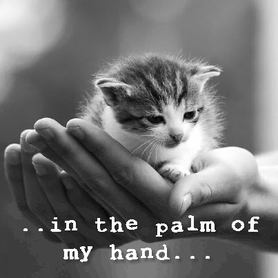 kitten in palm