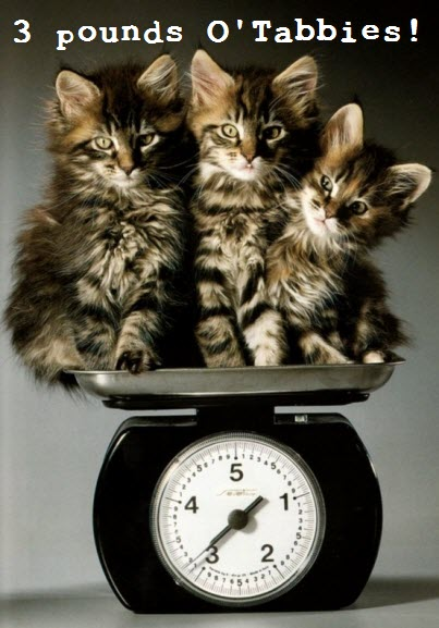 pounds of tabbies