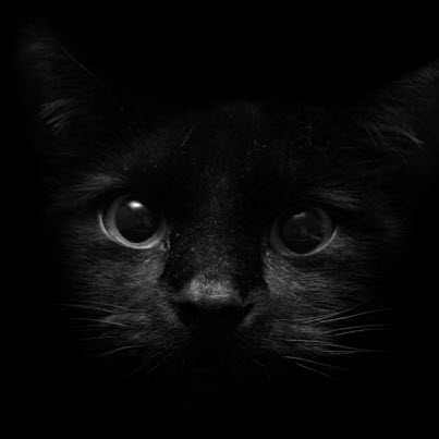 black kitten in black