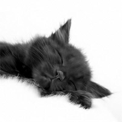 black kitten on white rug