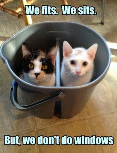 cats in bucket