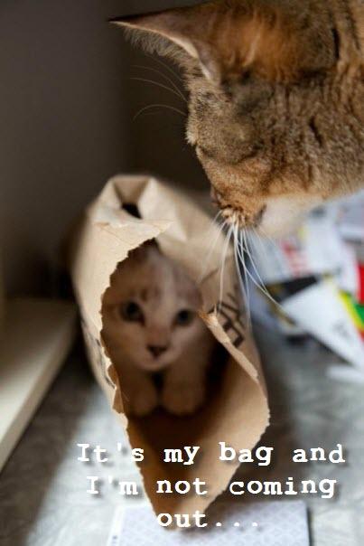 hiding in my bag