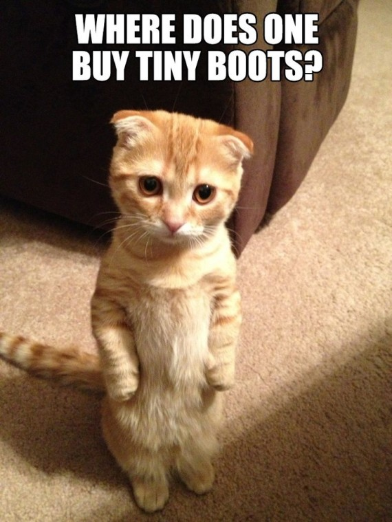 real puss in boots