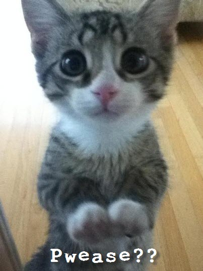 super cute big eyes kitten