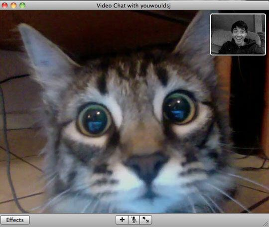 video chat cat