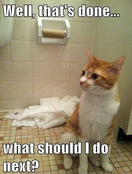 what next cat