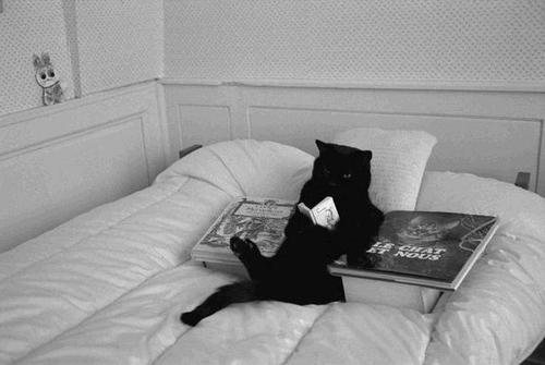 black cat reading in bed