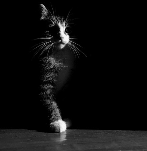 cat in the shadows