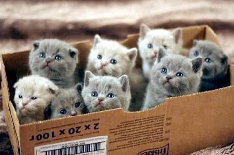 Box o' cats